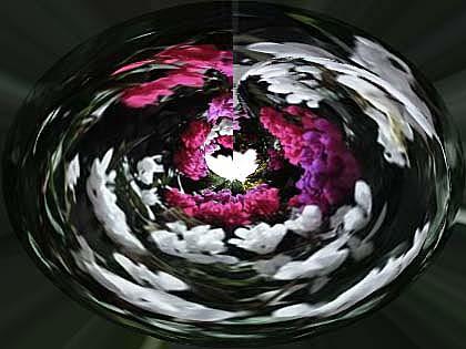 C 白420pix球面座標ガーデンシクラメン01-1.jpg
