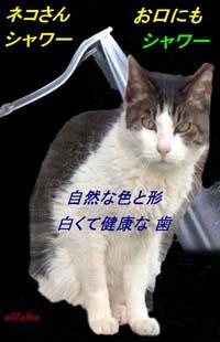 健康200Pixcelお口シャワー03~ ★1CIMG0742-1.jpgのコピー.jpg