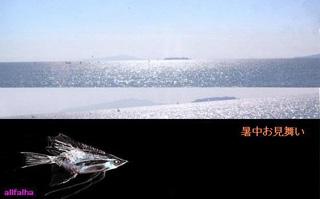 深海かがやき-2.jpgのコピー.jpg